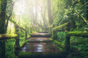 Wie können wir unseren ökologischen Fußabdruck reduzieren?